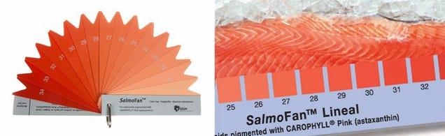 Así tiñen los salmones de granja para que su carne se vea rosa, no gris