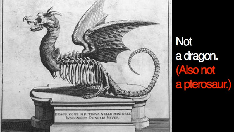 Why creationists love Meyer's dragon