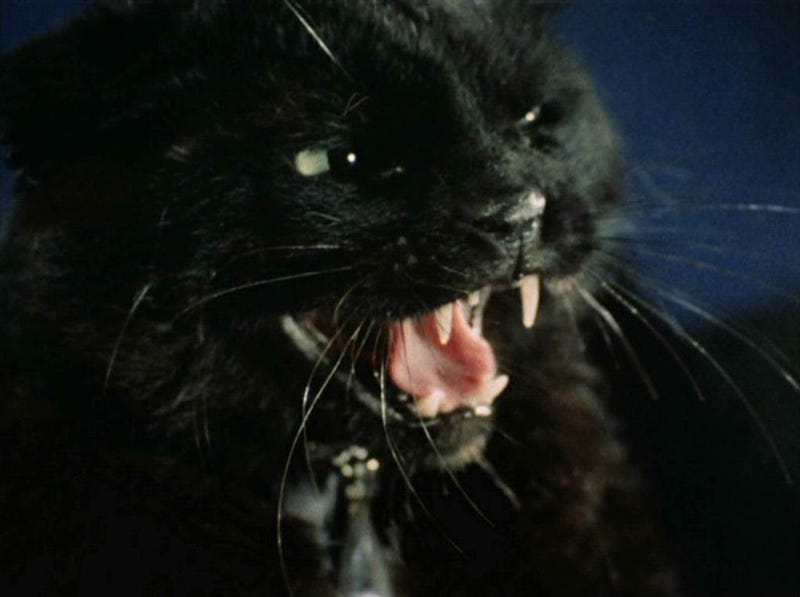The Ultimate Guide to Evil Cats in Science Fiction and Fantasy