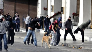 The Heroic Riot Dog of Greece
