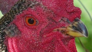 Why Do Birds H