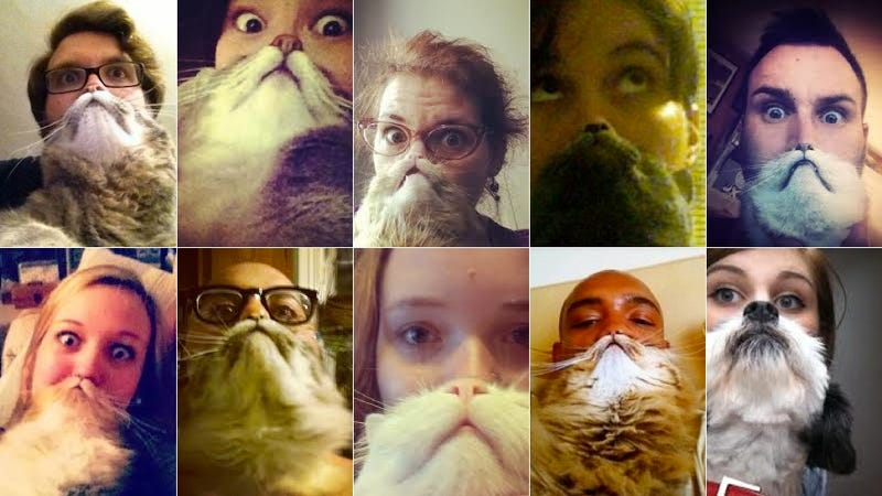 """Cat Bearding"" Finally Combines Cats, Cameras and the Internet"