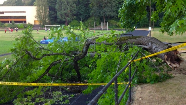 This Is The Giant Tree Limb That Hospitalized A Woman In Oregon By Suddenly Falling On Her