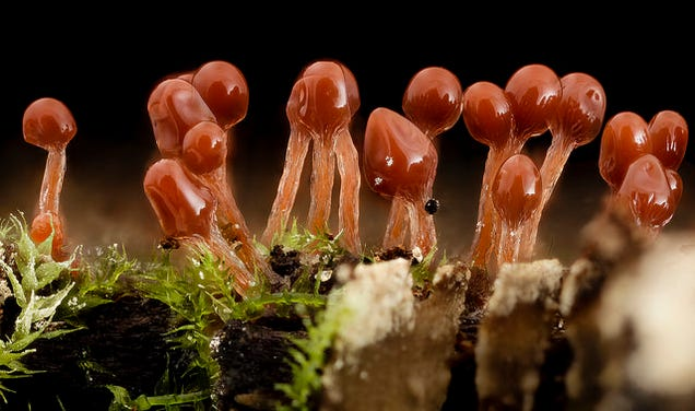 Hungry Slime Molds Reconstruct Ancient Road Networks