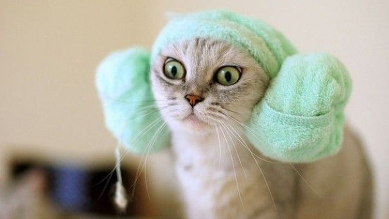 This Cat's Halloween Costume is Way Better Than Your Halloween Costume