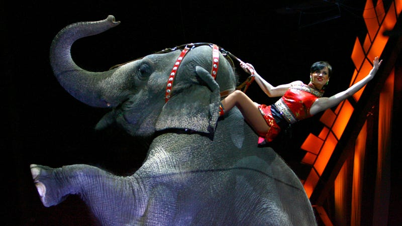 Ringling Bros. Elephant Shot in Mississippi Drive-By