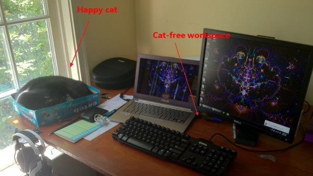 Contain Cats at Your Workspace with a Board Game Box