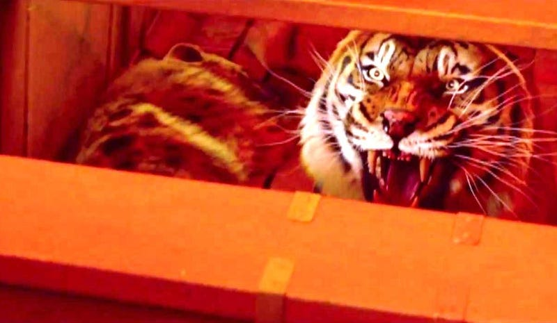 Life of Pi could be the year's second most gorgeous fantasy movie