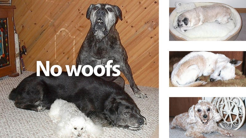 These Cute Dogs Are Not Alive—They Are Freeze-Dried