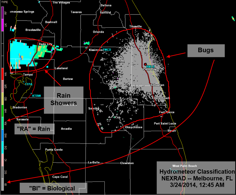 Want to Track Bats, Bugs, and Tornado Debris? Use Weather Radar.