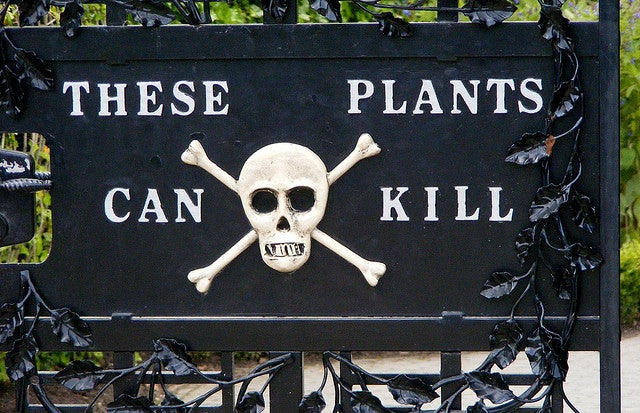 When spring comes round again, let's all go to the Poison Garden