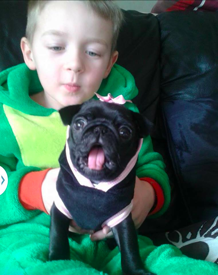 Thieves Caught on Video Stealing 6-Year-Old Burn Victim's Beloved Pug