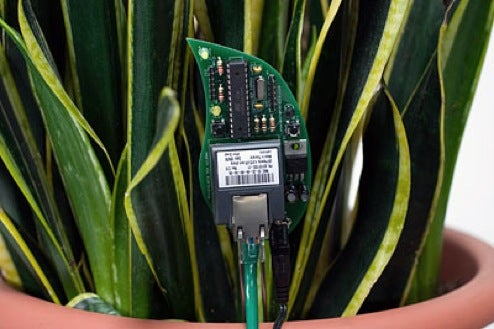 Now Even Thirsty Houseplants Demand Attention With DIY Twitter Kit