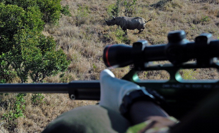 Rich Texans Bid $350,000 To Kill Endangered Rhino