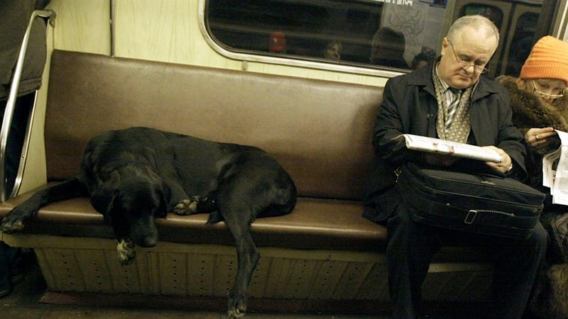 Congress May Soon Let Us Bring Dogs on Special Squee Trains
