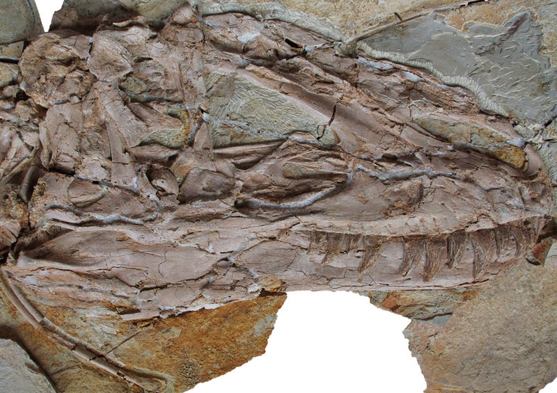 Hard evidence that giant tyrannosaurs were cuter than you ever thought possible