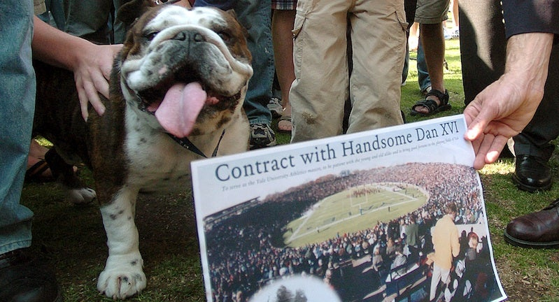 Bulldog Mascots Are Doomed, Flatulent, And Beloved