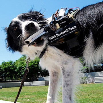 Know What Your Dog Really Wants With This Pooch-to-People Translator