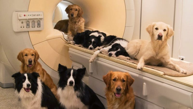 Scientists Find Striking Similarities Between Human and Dog Brains