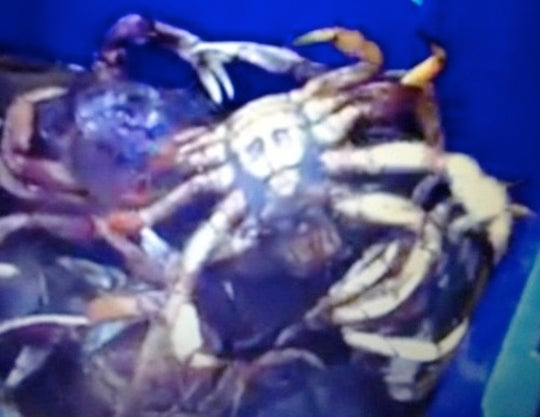 So-Called 'Jesus Crab' Looks Exactly Like Osama bin Laden