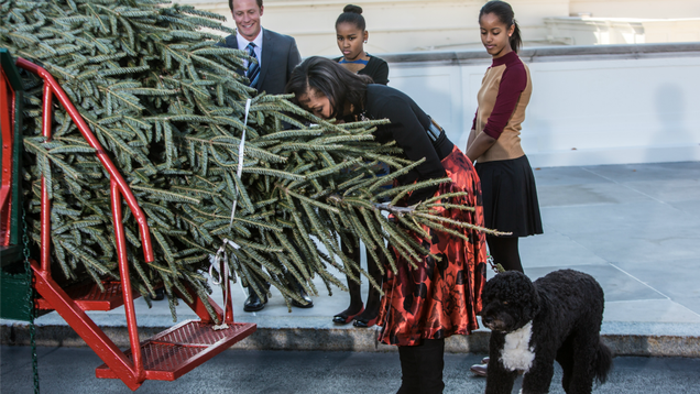 FLOTUS Dabbles in Dendrology With White House Christmas Tree