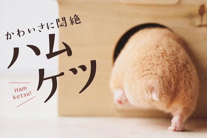 Hamster Ass Is Japan's Newest Craze
