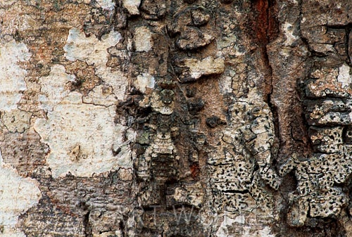 Can you spot the animals hidden in these wildlife photos?