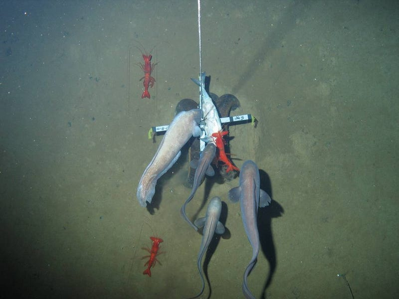 Our first glimpse of ocean life at the bottom of an unexplored trench