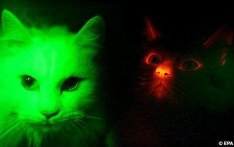 Glow-in-the-Dark Cats Could Make For a Unique Home Lighting Solution