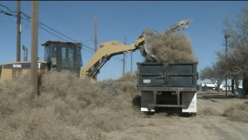 Tumbleweeds have invaded Roswell, residents trapped in homes