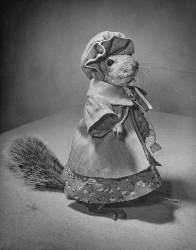 This squirrel was a 1940s fashion plate
