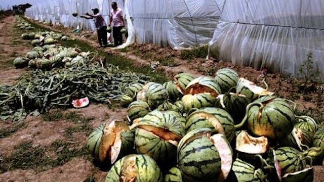 Why Did All These Watermelons Explode?