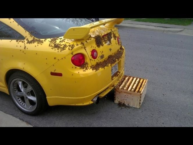 Bee Car: Photos