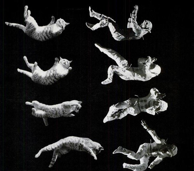 The experiment to determine whether an astronaut could fall like a cat
