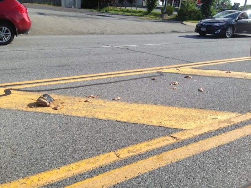 """Why Is This Road Covered In Rotting Meat?"" Residents of NY Town Ask"