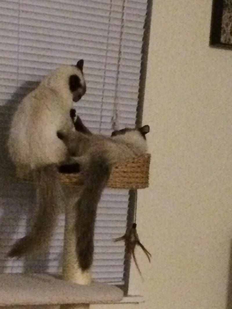 Scenes from a cat tree (post your pets!)