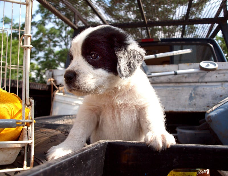 The Cutest Pups In Trucks On National Dog Day