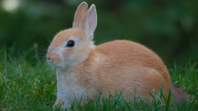Bunny Murderer Could Get Two Years in Prison