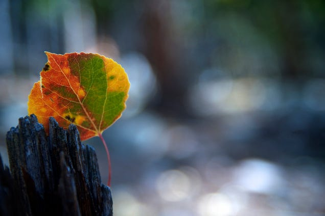 Shooting Challenge: Fall Leaves 2014