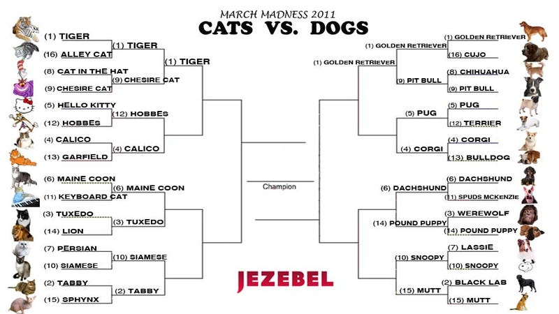 Cats vs. Dogs: The Claws And Paws Are Out