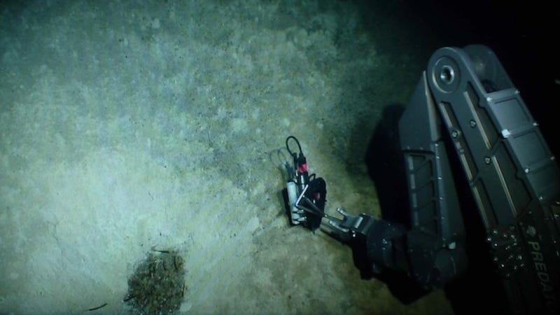 The First Pictures of Life in the Deepest Ocean Vents Ever Discovered