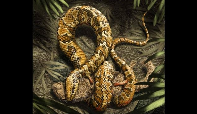Brazil Would Like Its Four Legged Snake Fossil Back