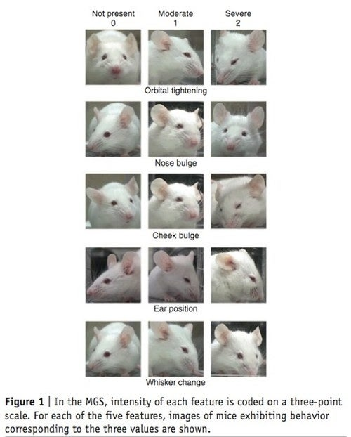 Research Paper Reveals All The Ways Scientists Hurt Mice