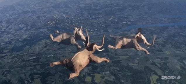 Skydiving elephants and other animals doing crazy stunts