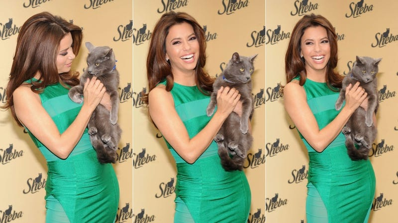 Eva Longoria Is a Sexy Crazy Cat Lady in Her New Cat Food Commercial