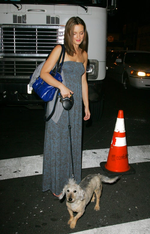 Leighton Meester Upstaged By Cunning Canine