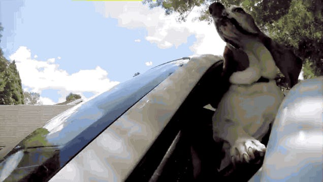 Look What Happens When You Take A Dog For A Ride In A Porsche
