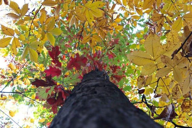 Fall Shooting Challenge Gallery 1