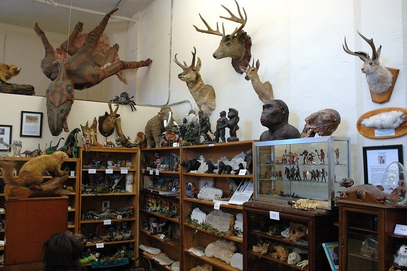 Bigfoot and me: A visit to the International Cryptozoology Museum