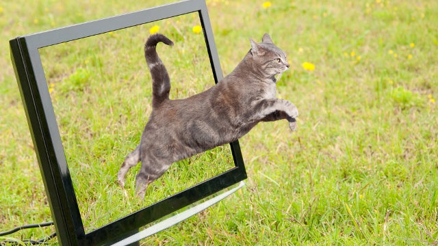 And So It Begins: Internet Cat Video Film Festival to Take Place Next Month in Minneapolis
